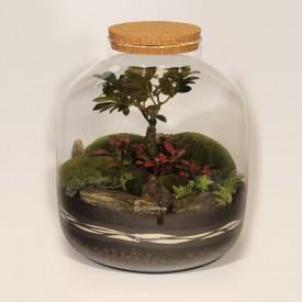 38cm Glas Ficus, Efeu, rote Phytonia DIY-Bausatz Wald im Glas Wald im Glas DIY