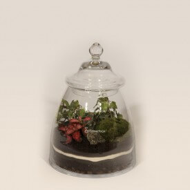 Jar 28cm ivy, fittonia DIY forest kit in a jar Forest in a jar DIY kits