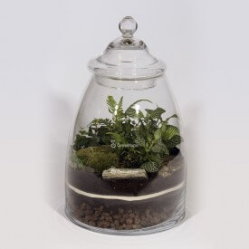 Jar 40cm Fern, ivy, fitonia green DIY forest kit in a jar Forest in a jar DIY kits