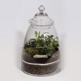 Tarro 40cm Helecho, hiedra, fitonia Kit de bricolaje bosque en un tarro bricolaje