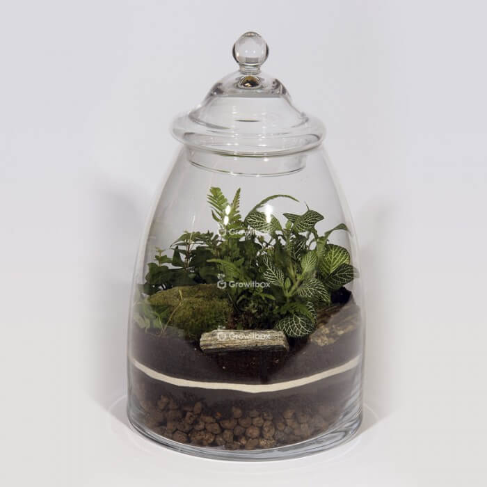 Jar 40cm Fern, ivy, fitonia green DIY forest kit in a jar Forest in a jar DIY kits