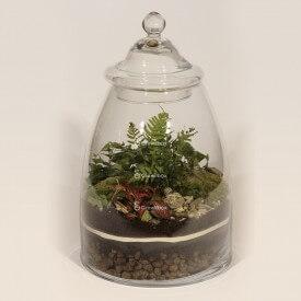 Glas 40cm Farn, Efeu, rote Phytonie DIY-Bausatz Wald im Glas Wald im Glas DIY