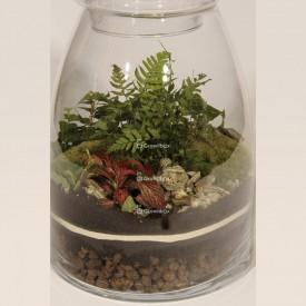 Jar 40cm Fern, ivy, fitonia red DIY forest kit in a jar Forest in a jar DIY kits