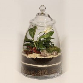 Glas 40cm Wingflower, rot Phytonia DIY-Bausatz Wald im Glas Wald im Glas DIY