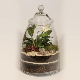 Vaso 40cm Wingflower, rosso fitonia kit fai da te foresta in un vaso foresta in un vaso fai da te