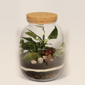 Jar 32cm Spathiphyllum, red phytonia, ivy DIY forest kit in a jar Forest in a jar DIY kits