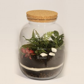 Jar 32cm Fern, phytonia DIY forest kit in a jar Forest in a jar DIY kits