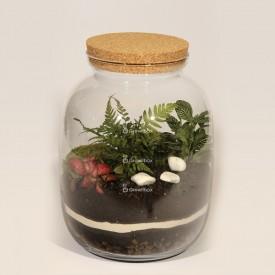 Vaso 32cm felce, fitonie kit fai da te foresta in un vaso foresta fai da te foresta in un vaso