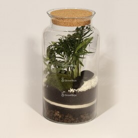 Jar 35cm Chamedora palm, phytonia DIY forest kit in a jar Forest in a jar DIY kits