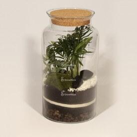 Tarro de 35 cm. Palmera, fitonia verde Kit DIY Forest en un tarro DIY Forest en un tarro