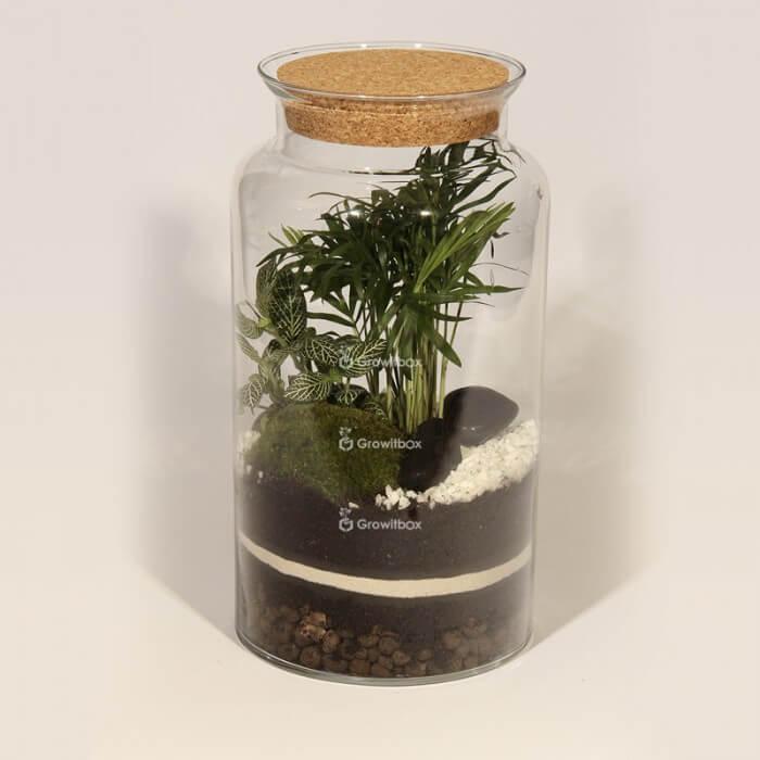 Jar 35cm Chamedora palm, phytonia DIY forest kit in a jar Forest in a jar DIY kits