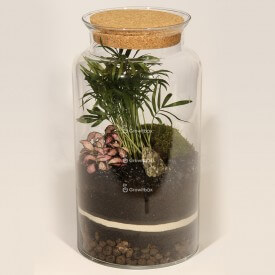 Jar 35cm Chamedora palm, phytonia pink DIY forest kit in a jar Forest in a jar DIY kits