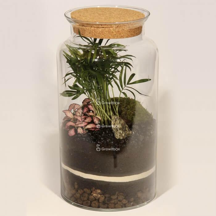 Jar 35cm Chamedora palm, phytonia pink DIY forest kit in a jar Forest in a jar DIY kits