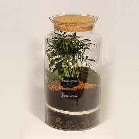Jar 35cm Chamedora palm, ivy DIY forest kit in a jar Forest in a jar DIY kits