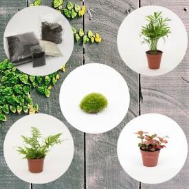 Set di vasetti per piante di media grandezza della foresta