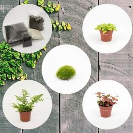 Set de pots bas en bois Set de plantes