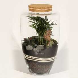 45cm jar Palm with Syngonium and volcanic lava plant terrarium Forest in a jar DIY kits