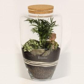 Tarro de 45 cm de palma con Syngonium y corteza de piedra del bosque del terrario en un tarro de bricolaje