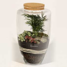 45cm jar Palm with red and green fitonia plant terrarium Forest in a jar DIY kits