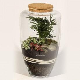 Tarro de 45 cm de palma con fitonias rojas y verdes Bosque en un tarro bricolaje