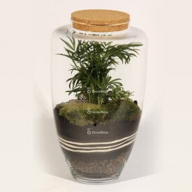 45cm jar Palm with fitonia and ZEN stone plant terrarium Forest in a jar DIY