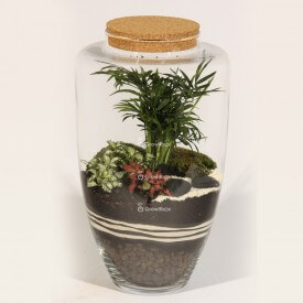 45cm jar Palm with fitonia and ZEN stone plant terrarium Forest in a jar DIY kits
