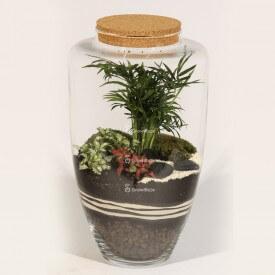 Glas 45cm Palme mit rotem Phytonia und Stein ZEN Forest in a jar DIY
