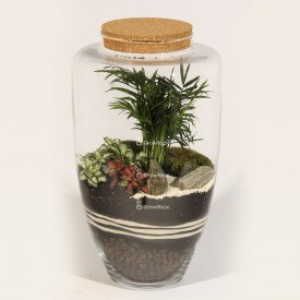 45cm jar Palm with fitonia and stone bark plant terrarium Forest in a jar DIY kits