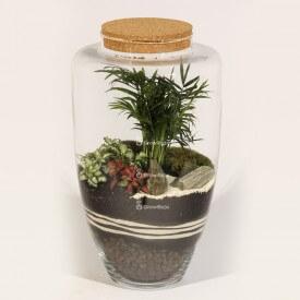 Glas 45cm Palme mit roter Phytonie und Steinrinde Wald im Glas DIY