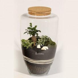 Glas 45cm Ficus Stein mazedonischen Wald in einem Krug DIY