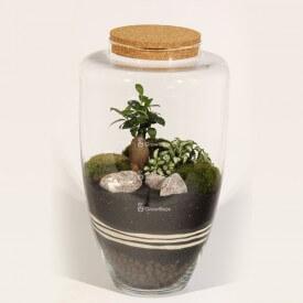 Glas 45cm Ficus Kieselstein Kirsche Wald in einem Glas DIY