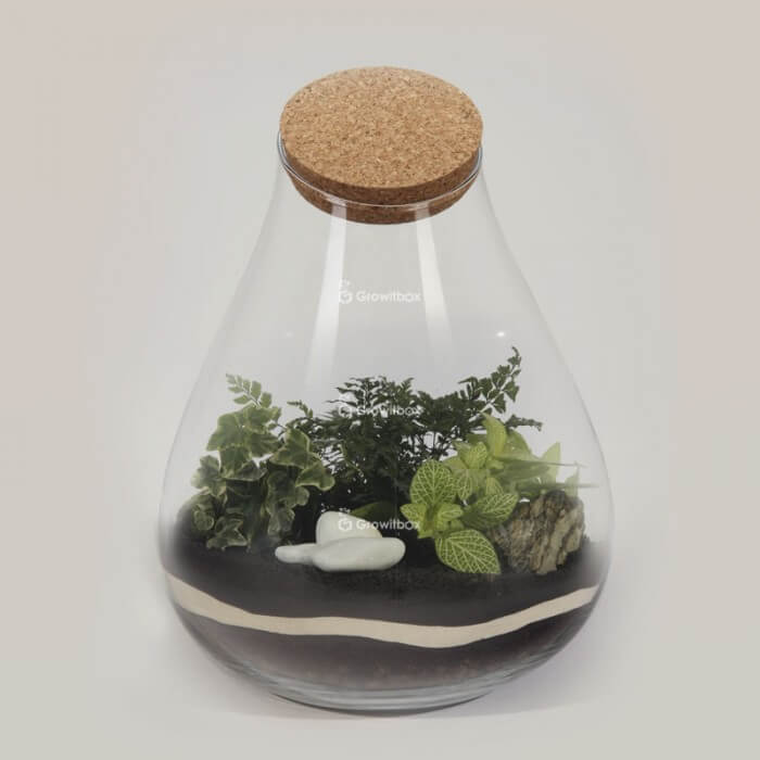 "DIY set ""Barcelona"" 37cm green Forest in a jar DIY kits"