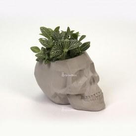 Szara czaszka 3D z zieloną fitonią Betonowe dekoracje