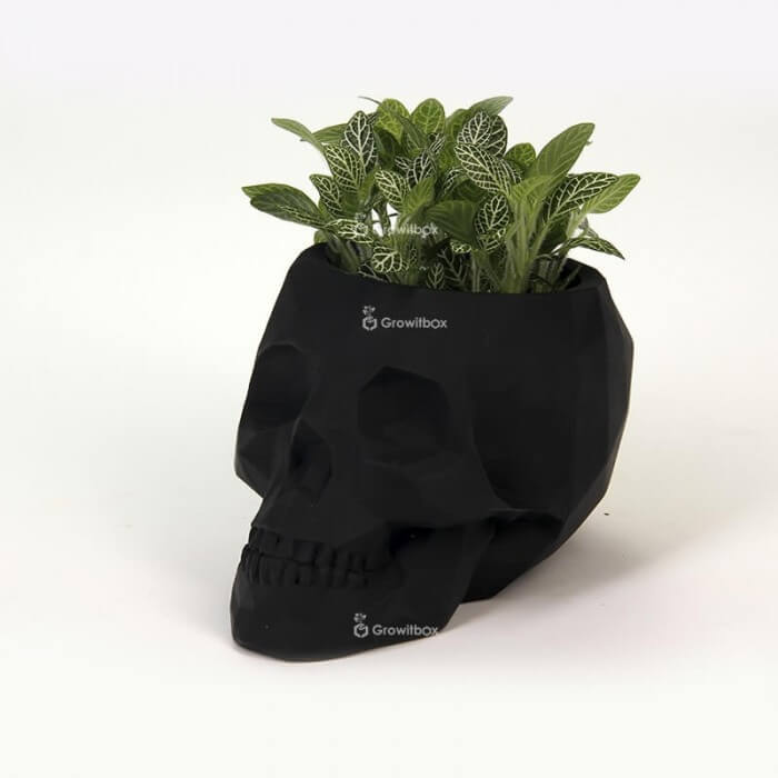 Black 3D skull with green phytonia Concrete decorations