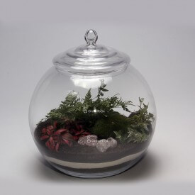 Ball 30cm fern, red phytonia DIY kit forest in a jar Forest in a jar DIY kits