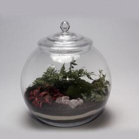 Boule 30cm fougère, phytonie rouge kit de bricolage forêt dans un bocal forêt dans un bocal de bricolage