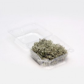Żywy mech srebrny chrobotek reniferowy rozmiar S Mchy