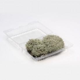 Reindeer silver moss, size L Moss