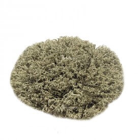 Reindeer silver moss size S Mosses