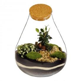 "DIY Barcelona"" 37cm Ficus-Glas mit Phytonia DIY Wald im Glas"