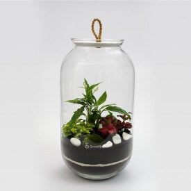 Jar 42cm Spathiphyllum, fittonia with macedonian stone Forest in a jar DIY kits