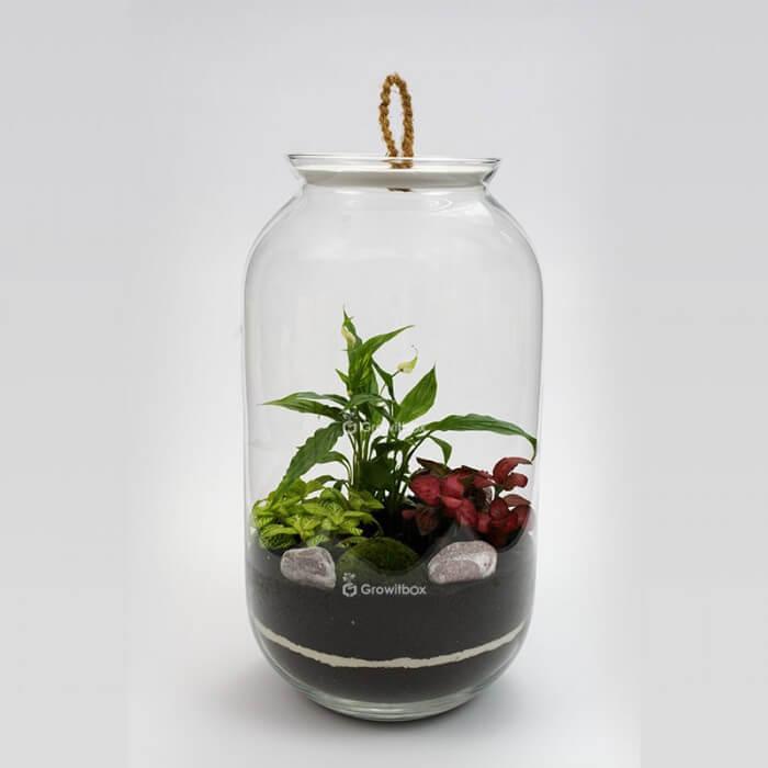 Jar 42 cm Spathiphyllum, fittonia cherry stone Forest in a jar DIY kits