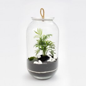 Jar 42cm Palm with macedonian stone Forest in a jar DIY kits