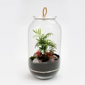 Jar 42cm Palm, red fittonia with cherry stone DIY kits