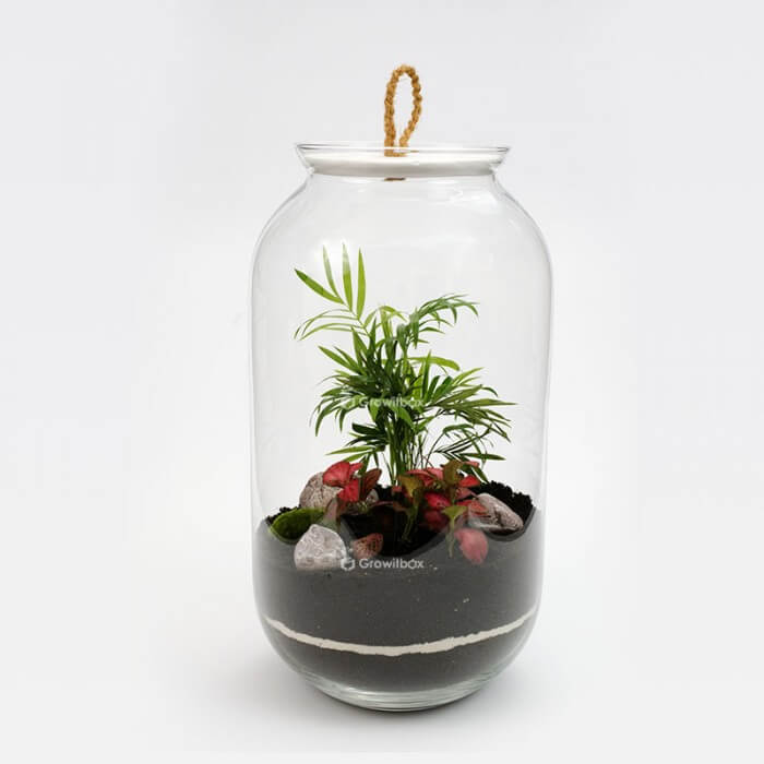 Jar 42cm Palm, red fittonia with cherry stone Forest in a jar DIY kits