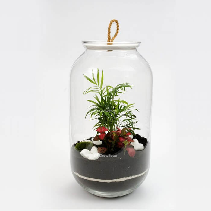 Jar 42 cm Palm, phalaenopsis with macedonian stone Forest in a jar DIY kits
