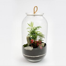 jar 42 cm Palm with phytonium stone bark DIY kits