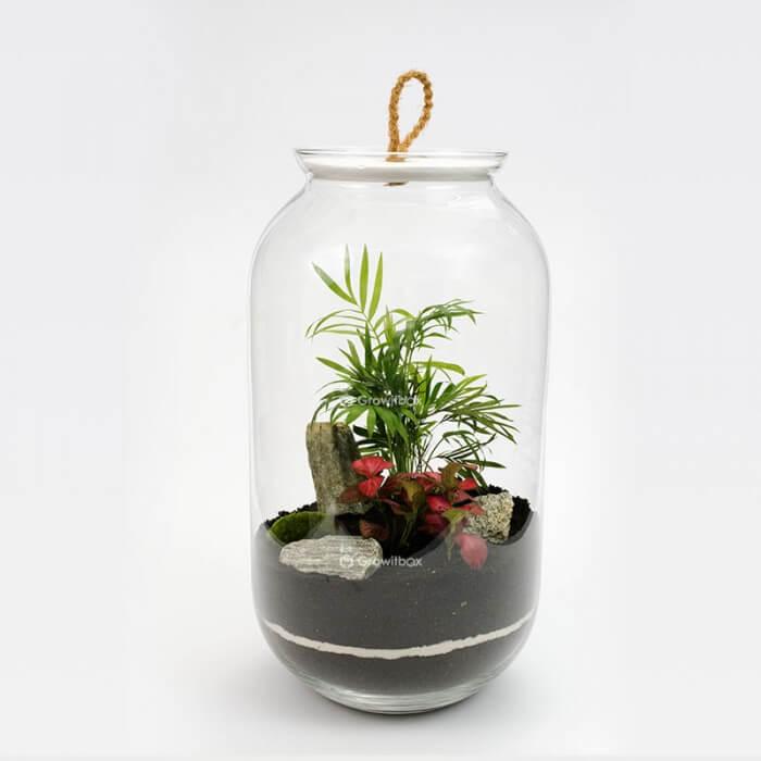 jar 42 cm Palm with phytonium stone bark Forest in a jar DIY kits