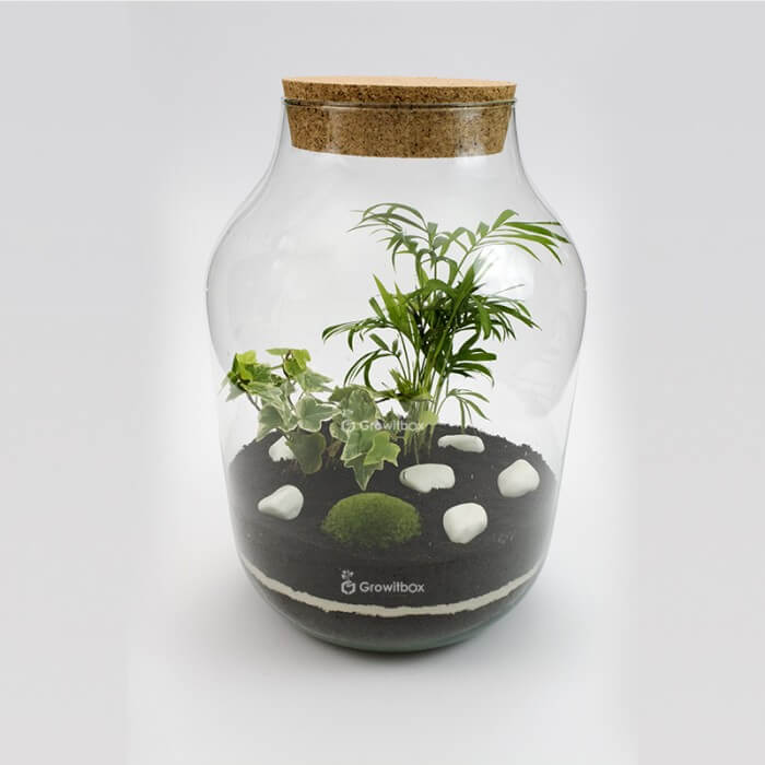 Jar 37cm palm ivy white Macedonian Forest in a jar DIY