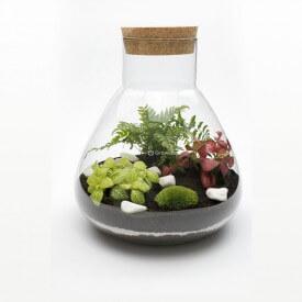 Set 31cm Farn mit Phytonia Wald in einem Glas DIY